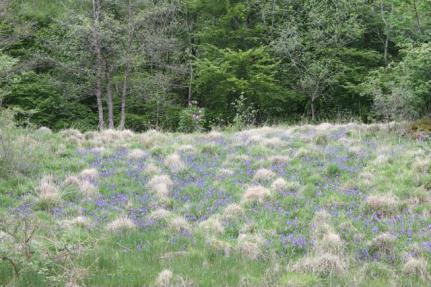 10 bluebells