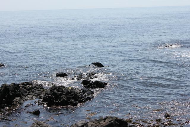 22 seal mounting rock