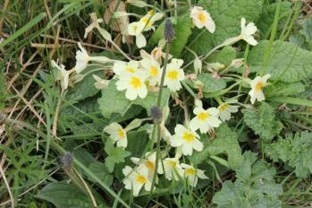 06 flowers