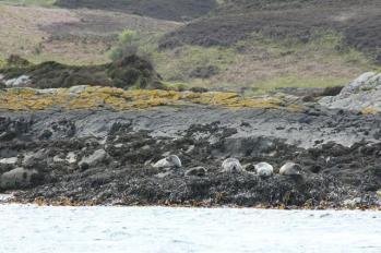 09 seals