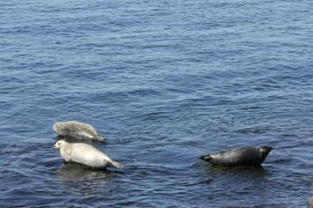 33 3 seals