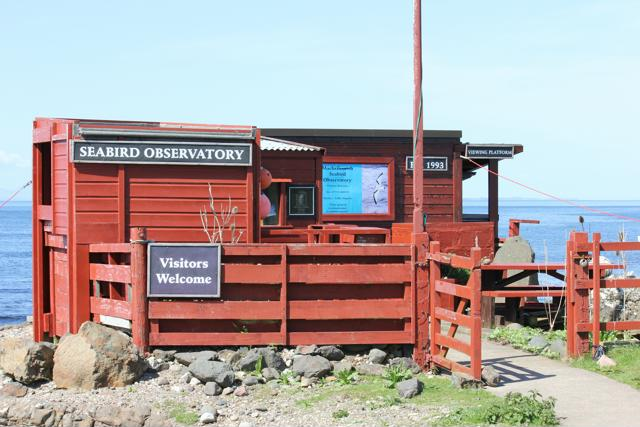 30 Machrihanish Seabird and Wildlife Observatory