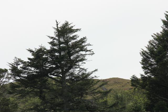 13 white-tailed sea eagle