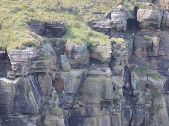 12 seabird colony on cliffs