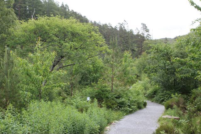 05 track on Corrieshalloch Gorge