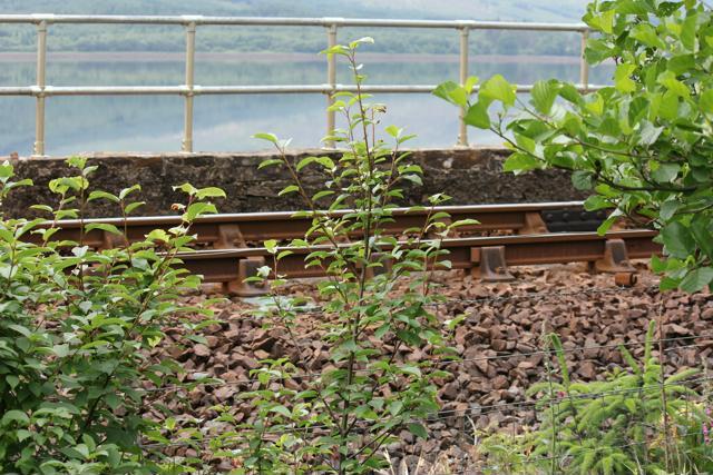 08 trainline to Glenfinnan