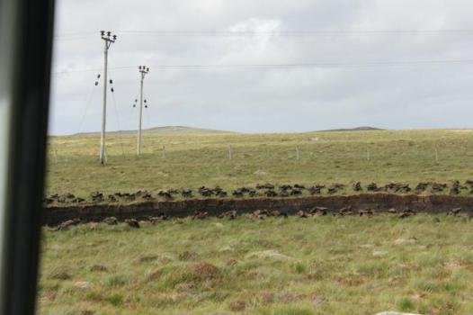 15 remains of where peat has been vut out