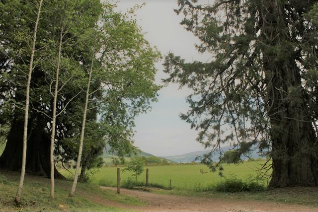 01 2 redwood trees