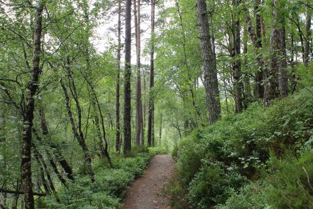 12 track through gorge