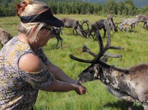 08 feeding reindeer