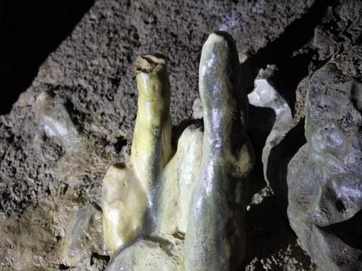 25 staligmites Crag Cave
