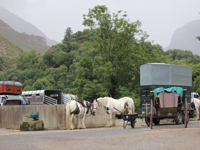 03 Pony and cart Gap of Dunloe