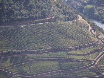 24 Douro Valley vineyards