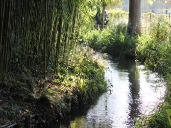86 Monet's Gardens