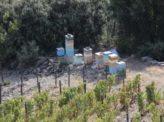 25 winery and beehives